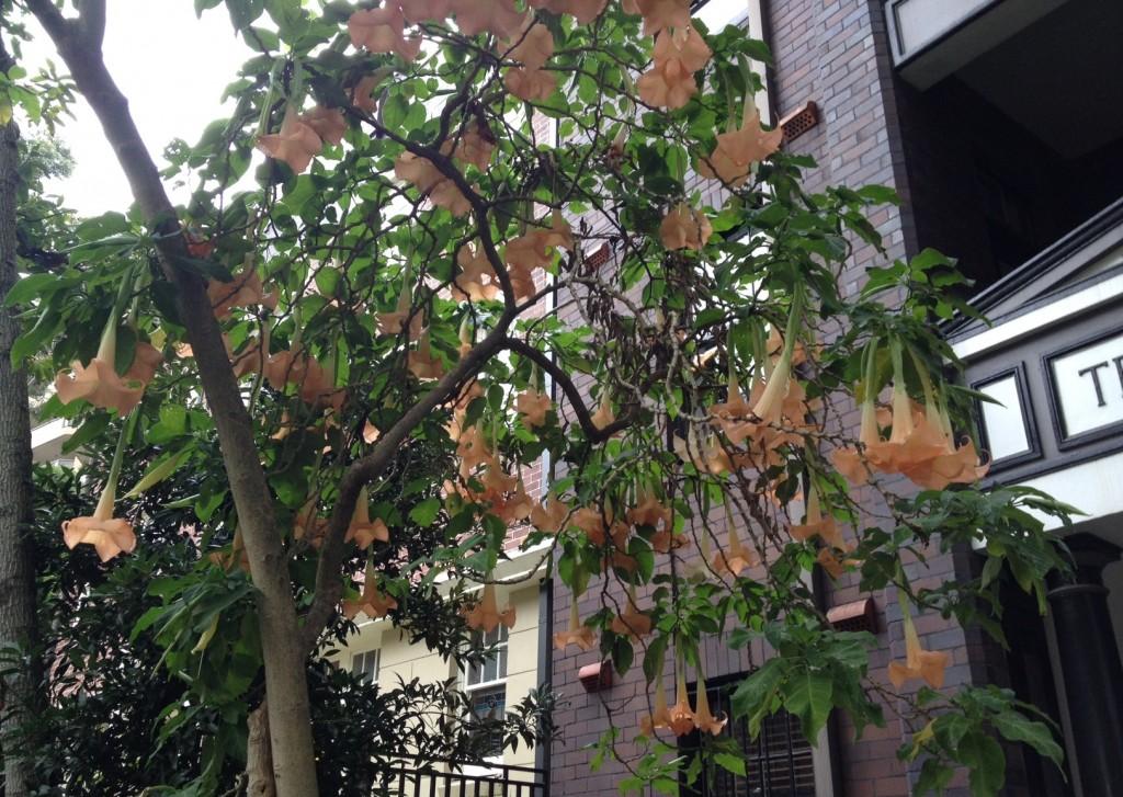 59.clapton blooms