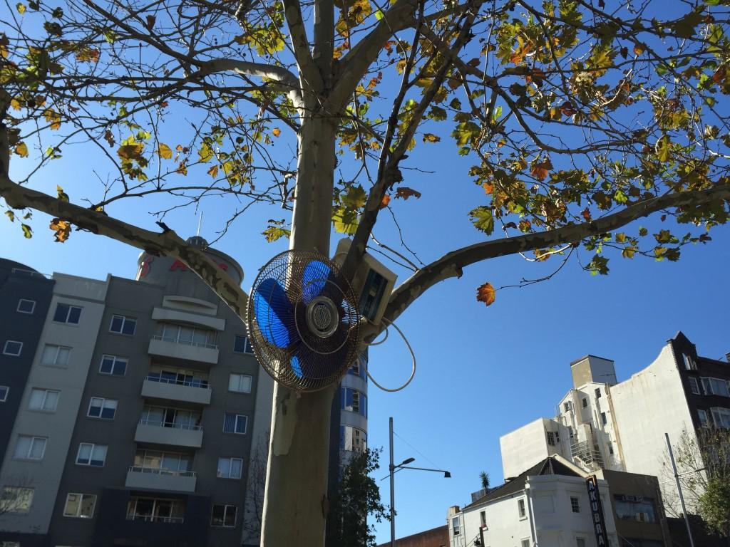 75.Fan tree